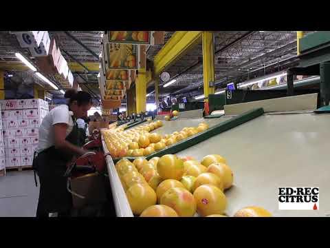 Agrumes, Floride, Ed-Rec, levée de fonds, oranges, pamplemousses, école, collecte de fonds