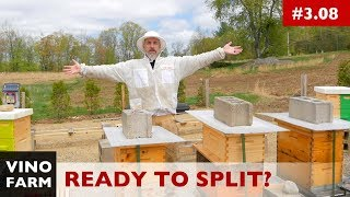 This Beekeeper is Ready For Splits!