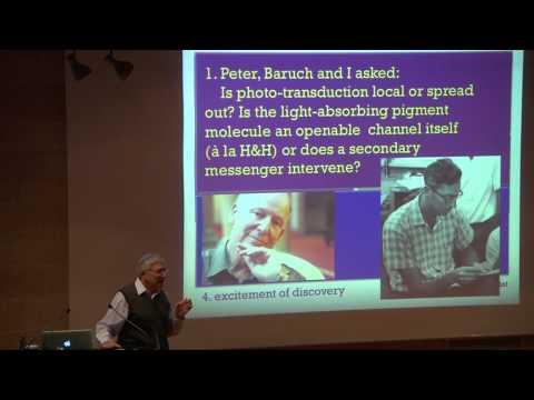 FROM ICNC TO ELSC | Shaul Hochstein
