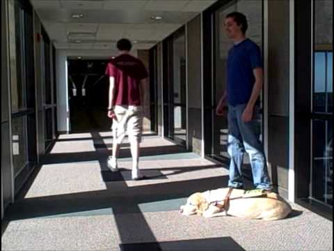 Greeting and Interacting With a Blind or Visually Impaired Individual