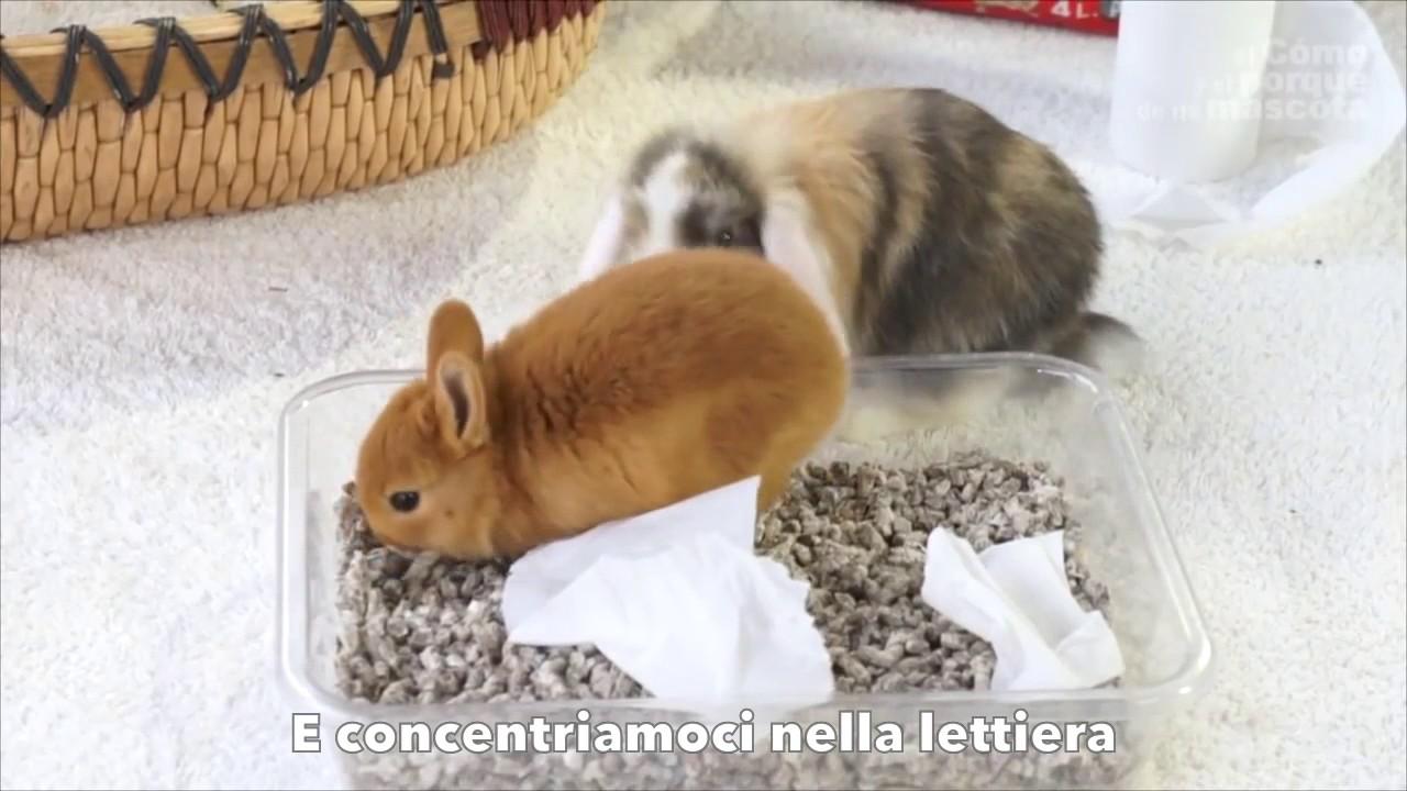 Conigli come far fare la cacca e la pip al proprio - Lettiera coniglio nano ...