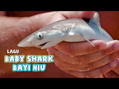 Download LAGU BABBY SHARK BAYI HIU
