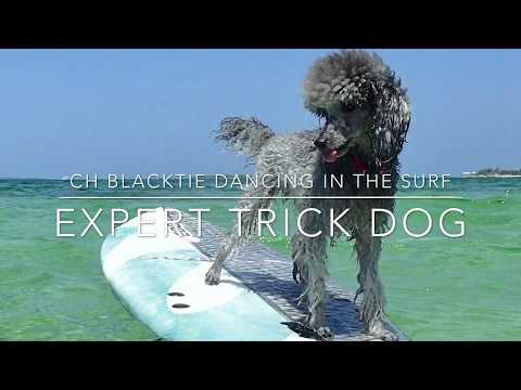 Surf Expert Trick Dog
