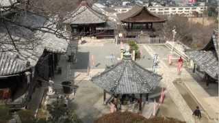 三井寺 園城寺.