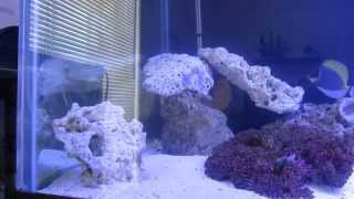 180 Gallon Salt Water Reef Tank Aquairum Custom Stand, Remote Refugium, 2 Months Running