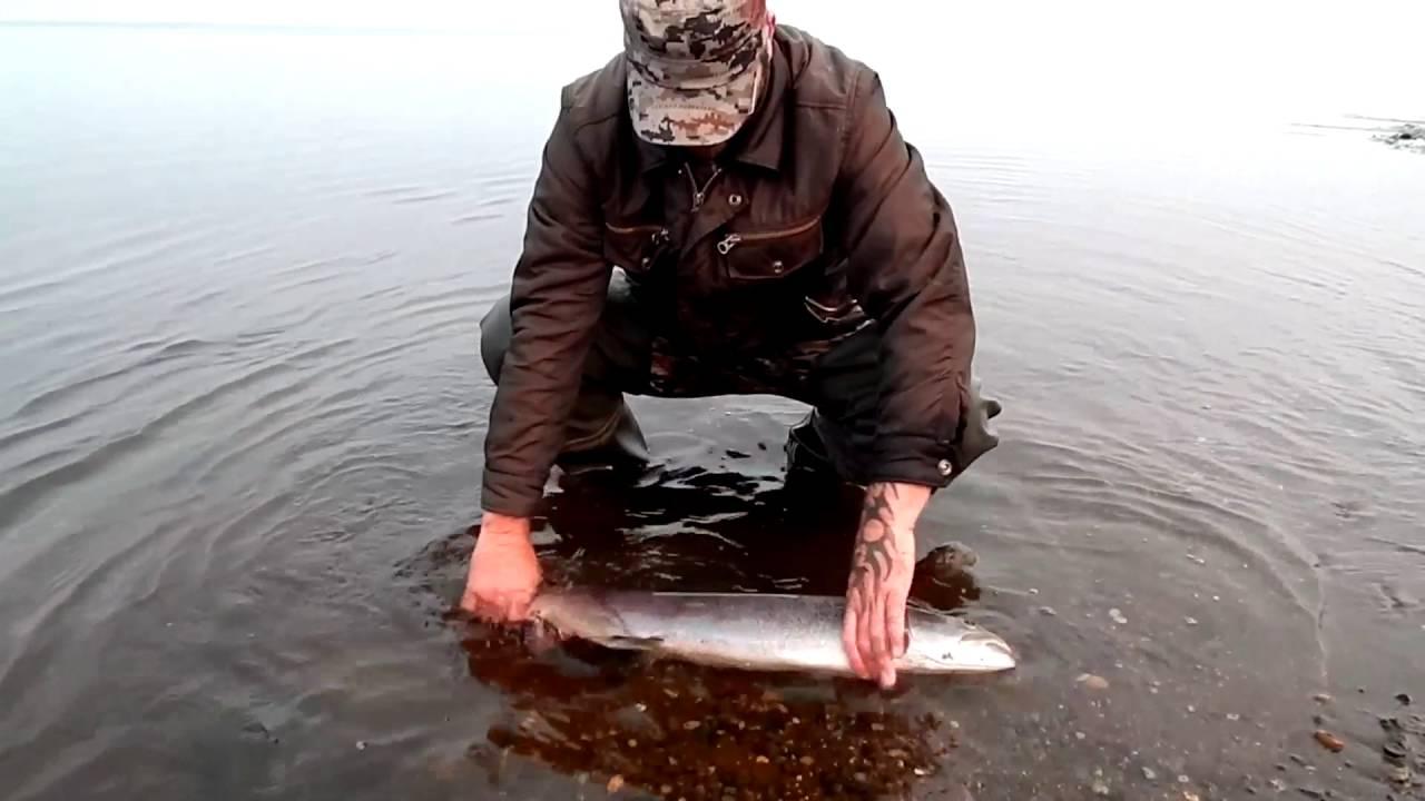 Рыбалка в Сибири,Таймень(подарок уходящего лета,спасибо тебе река!)