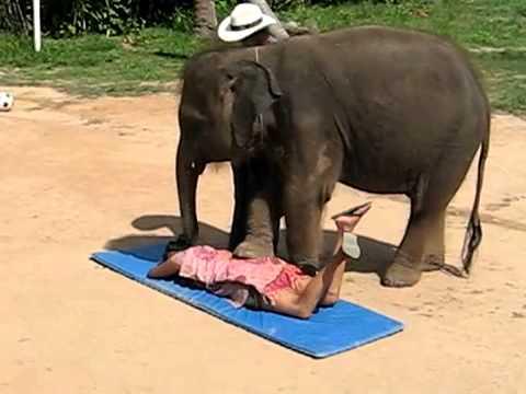 Cucciolo di elefante pratica massaggio thai a Koh Samui