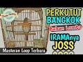 Perkutu Masteran Lomba Loop Ngriwik(.mp3 .mp4) Mp3 - Mp4 Download