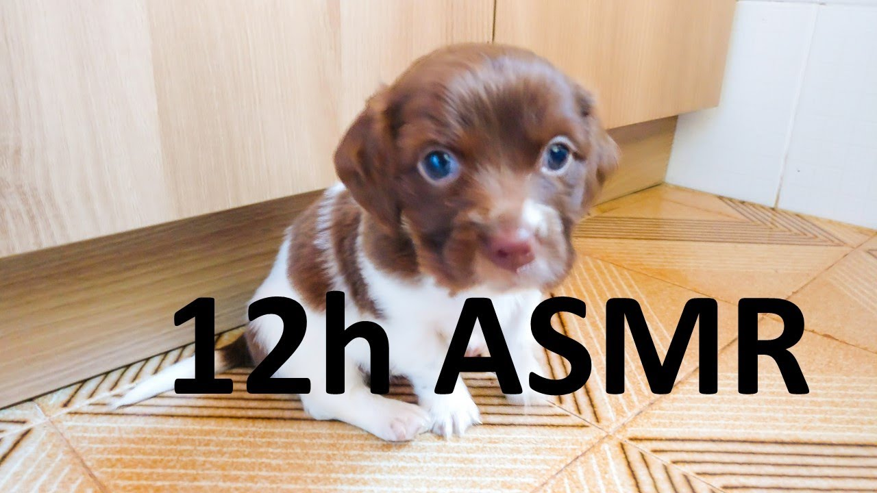 12 Hours Puppy - Asmr - Eating All The Time