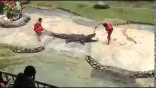 Crocodile Stunt gone wrong Thumbnail
