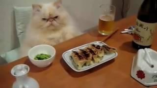 Кот дона Карлеоне | Мини прикол