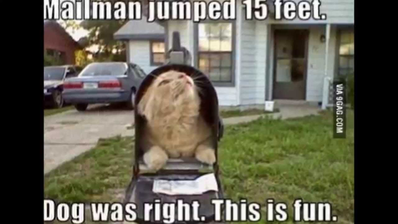 Youtube Cat And Mailman