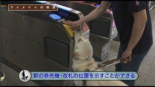 アイメイト(盲導犬)使用者の誘導―駅―
