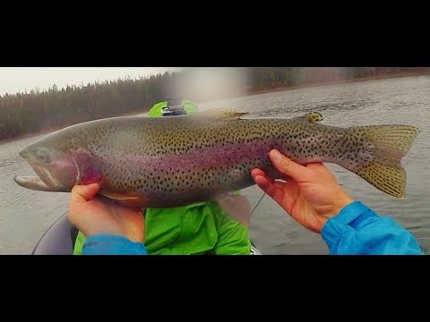 Fishing For Monster Rainbow Trout In The Flathead Valley - Montana - 2017