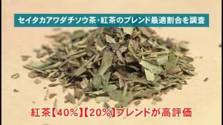 米子高専 知的セミナー:セイタカアワダチソウの有効利用(2017.3)