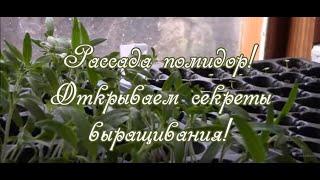 Рассада помидор.  Открываем секреты выращивания!(Делимся секретами выращивания рассады помидор, так как уже много лет выращиваем свои помидоры. Есть свои..., 2016-03-15T14:43:41.000Z)