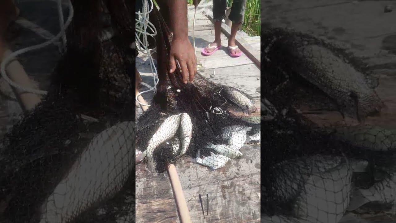 Fishing videos 🐟 beautiful Net fishing videos #shorts