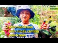 Mikat Mantenan Cucak Ranting Dan Konin  Mp3 - Mp4 Download