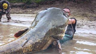 Самая Большая Рыба в Мире! Эти Уловы Рыбы Побили Все Рекорды