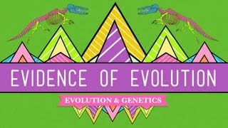 Evolution: It's A Thing   Crash Course Biology #20