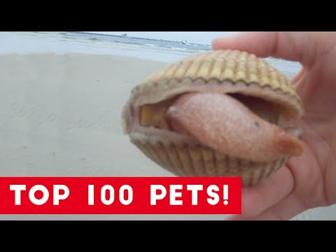 Top 100 Cute and Funny Animal Videos of 2017 | Funny Pet Videos
