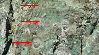 Pecked Curvilinear Nucleated (PCN) Petroglyphs - San Francisco Bay Area - California