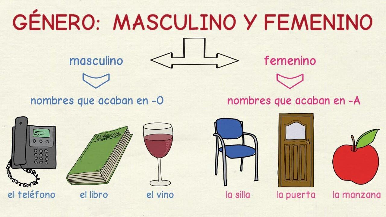 Aprender Español El Género Masculino Y Femenino Nivel Básico