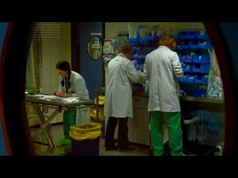 Veterinary Medicine DN300 - University College Dublin - UCD
