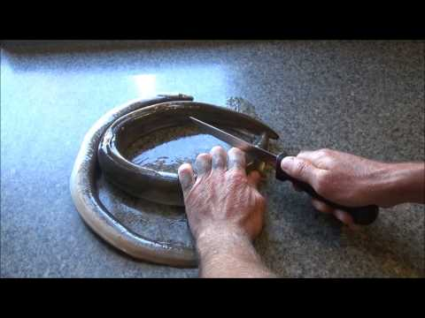 Catch, Clean, & Cook, Maple Eel