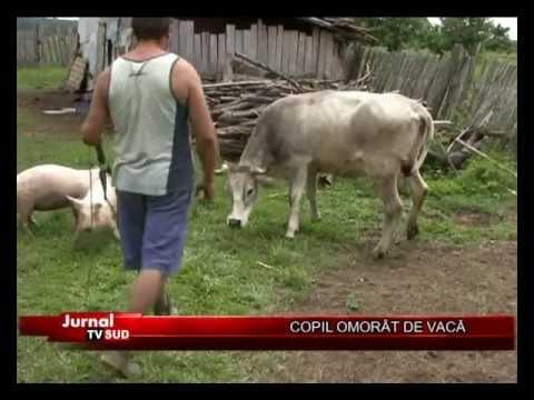 COPIL OMORAT DE VACA.mp4