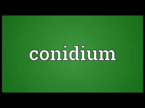 Header of conidium