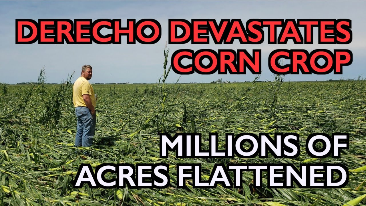 DERECHO: Corn Crop Catastrophe, Grain Stores Destroyed, Food Prices (Developing)