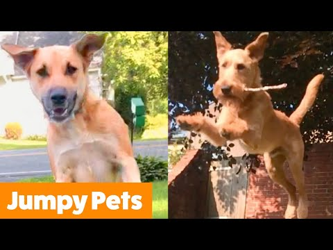 Excited Jumping Pet Bloopers | Funny Pet Videos