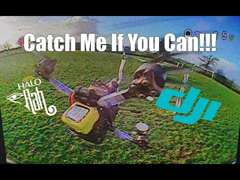 Фото Catch Me If You Can - DJI HD FPV Racing - HaloRC Rah