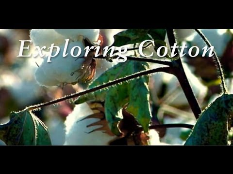 Made in Peru | Exploring Cotton