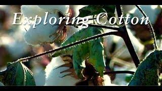 Made in Peru   Exploring Cotton
