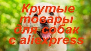Aliexpress для собачников. Топ 10 самых крутых товаров для собак с Алиэкспресс