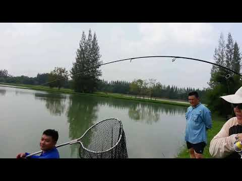 "(AJN custom rod) APR 5""6ft Stealth Carbon VS Chaophraya Catfish"