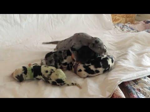 Nace un perro verde por el efecto de la biliverdina