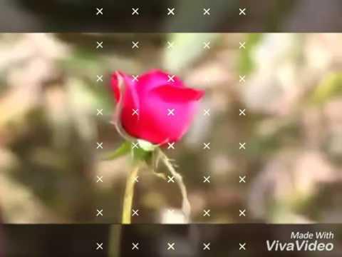 Bewafa Darling Nagpuri Song