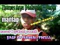 Bunga Malasiya Thomas Arya Cover By Deni Vocall Gitar Cover Deni Vocall Dgvc Mempersembhkan  Mp3 - Mp4 Download