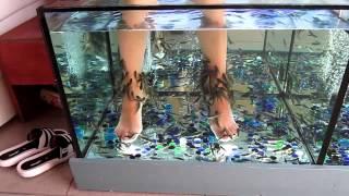 массаж рыбками(сочи набережная., 2012-12-15T16:03:41.000Z)