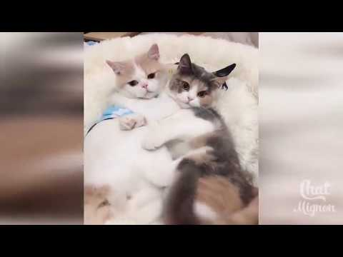 Funny Cats | Kittens - Playing | Fight | Meow | Dance | Cuddle | Hissing