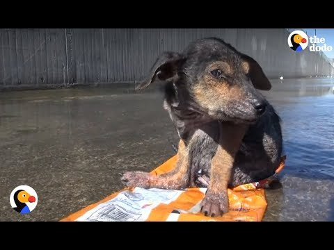 Dog Found Sitting On Trash Is So Loved Now   The Dodo