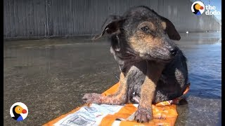 Dog Found Sitting On Trash Is So Loved Now   The Dodo thumbnail