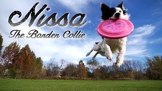 Kyle & Nissa - The Border Collie (parkour Dog Tricks)