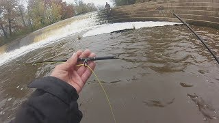 Fall Salmon Run- Broken Rod