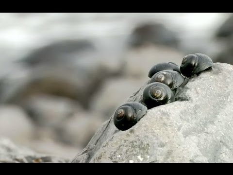 Thumbnail: Life in Rock Pools