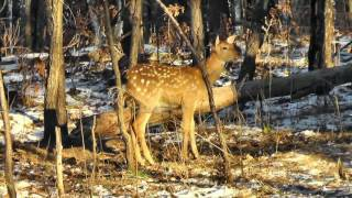 Центр охраны природы Зейский  10-25 октября 2016 г(Фильм о животных, проживающих на территории центра охраны природы