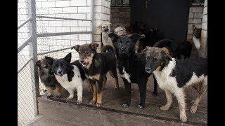 Собаки и кошки из Невинномысска